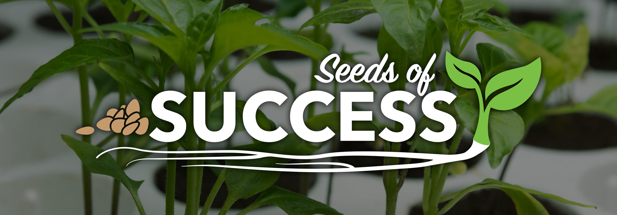 talking-shop-seed-starting