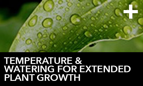 htg-info-center-ask-the-doc-articles-temperature-and-watering-for-extended-plant-growth-thumbnail