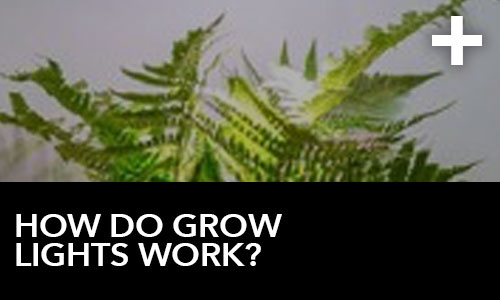 htg-info-center-ask-the-doc-videos-how-do-grow-lights-work-thumbnail