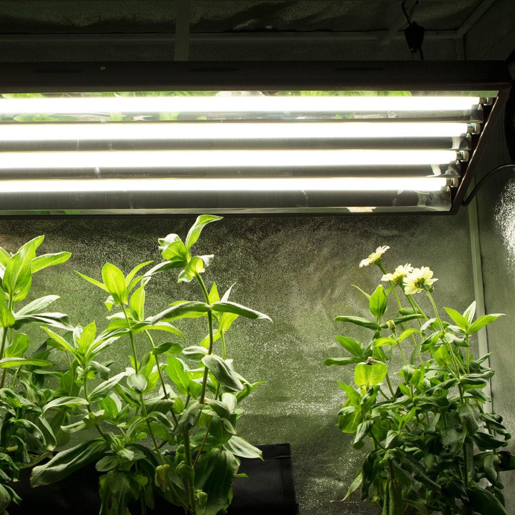 T5 Grow Lights For Veg Agromax T5 Veg Light Bulb 5400k