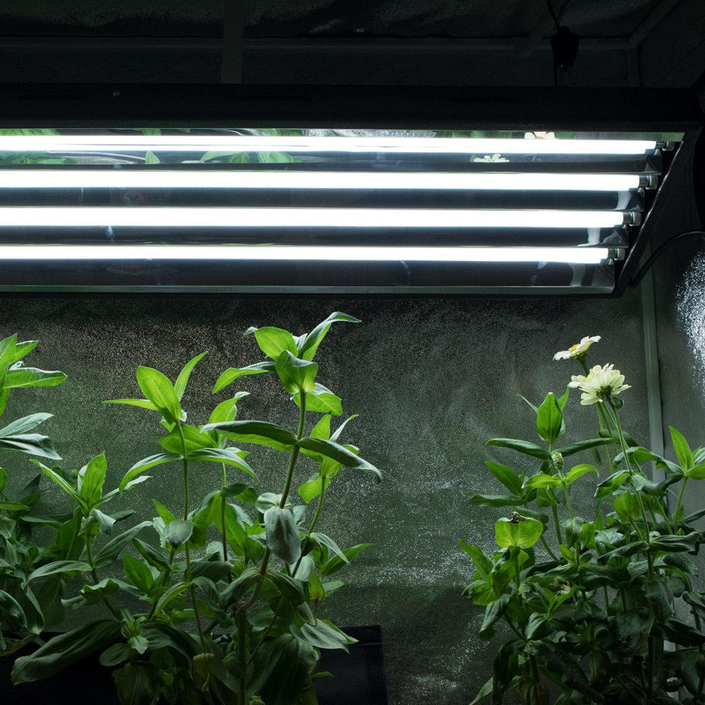 Agromax 2ft T5 Grow Light Bulb 6400k Htg Supply