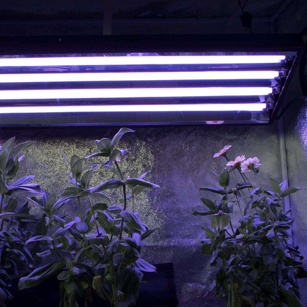 Agromax Pure Par Bulb For T5 Grow Light F54t5ho Series