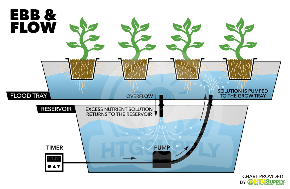Flood and Drain (Ebb & Flow) Hydroponics | HTG Supply