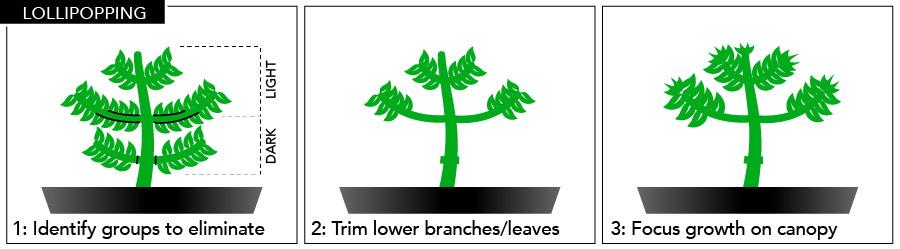 Plant Training | HTG Supply