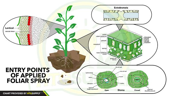Foliar Feeding | HTG Supply