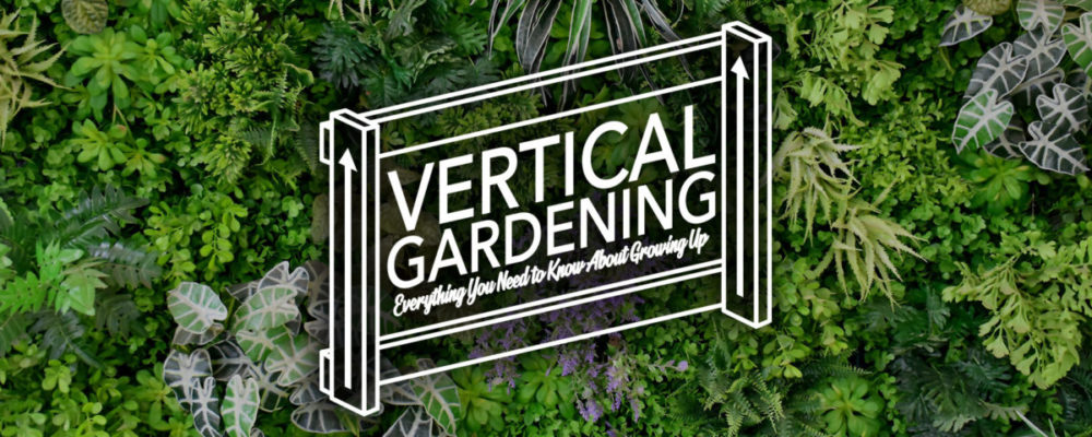Vertical Gardening - Growing Up in 2020