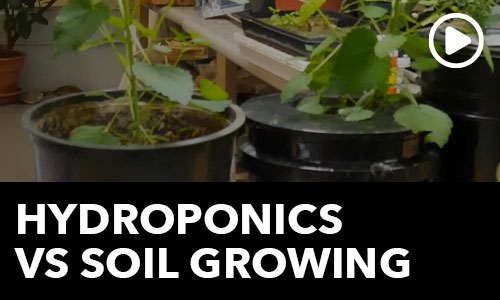 Hydroponics Vs Soil Growing: Ask the Doc