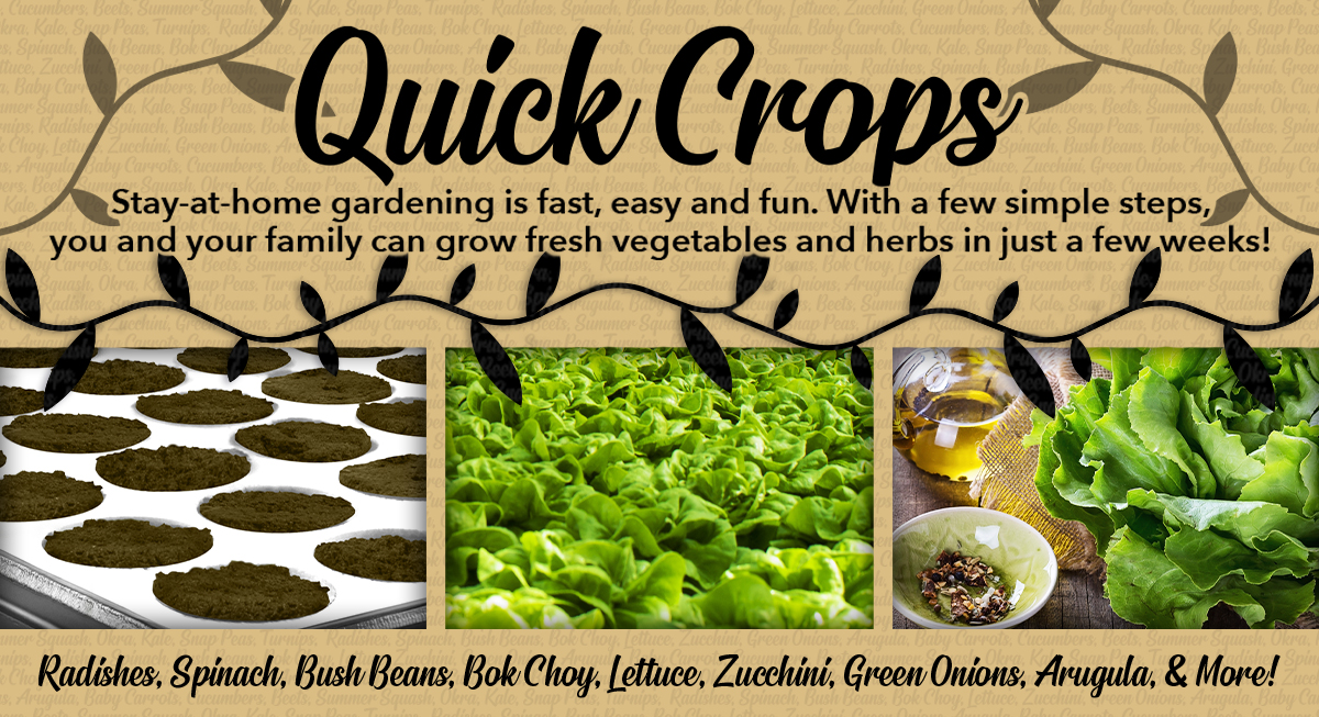 How to Grow Quick Crops